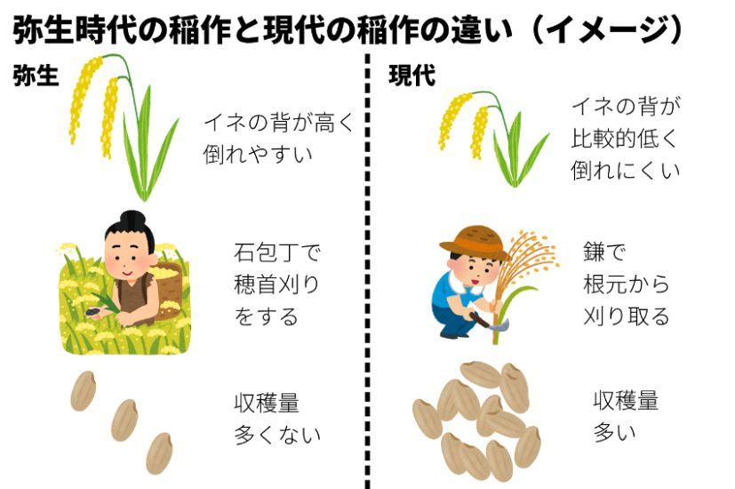 弥生時代と稲作と現代のそれの違い