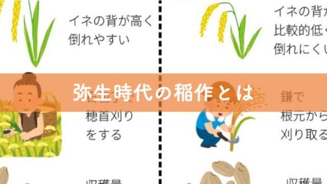 弥生時代の稲作とは